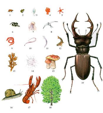 diversit t von insekten die h ufigkeit von insekten. Black Bedroom Furniture Sets. Home Design Ideas