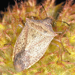 Dichotomous Key to Insect Diversity